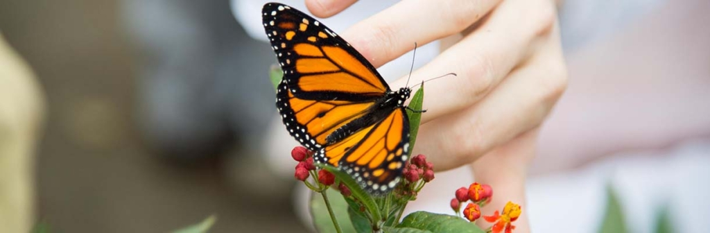 Photo by John Makowski